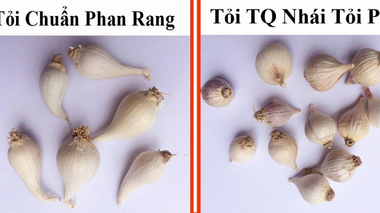 Công dụng và cách nhận biết tỏi cô đơn Phan Rang