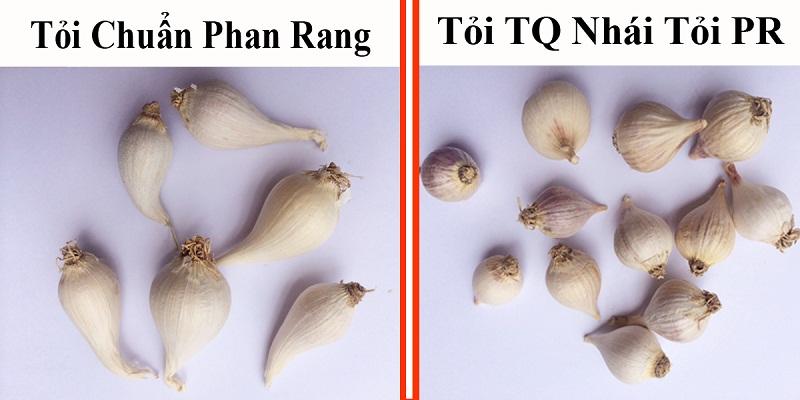 toi-co-don-phan-rang