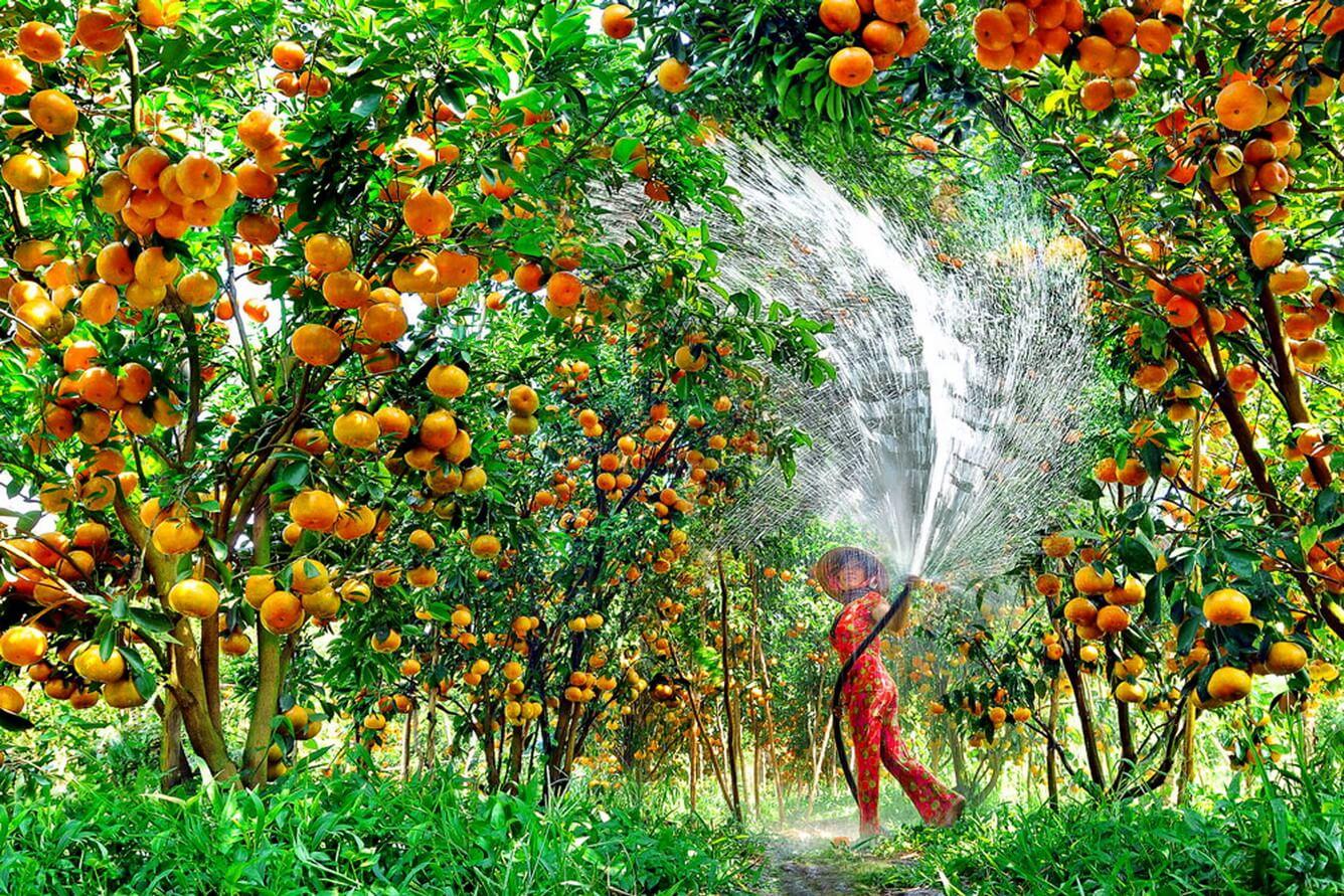 Mùa trái cây miền Tây
